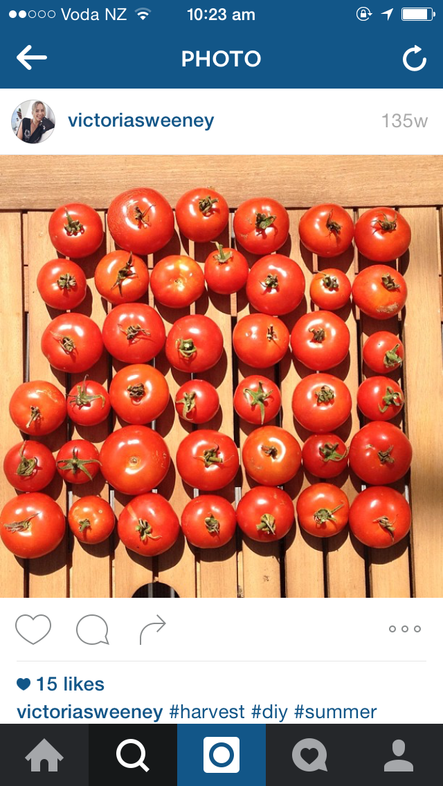 I Love Growing Tomatoes