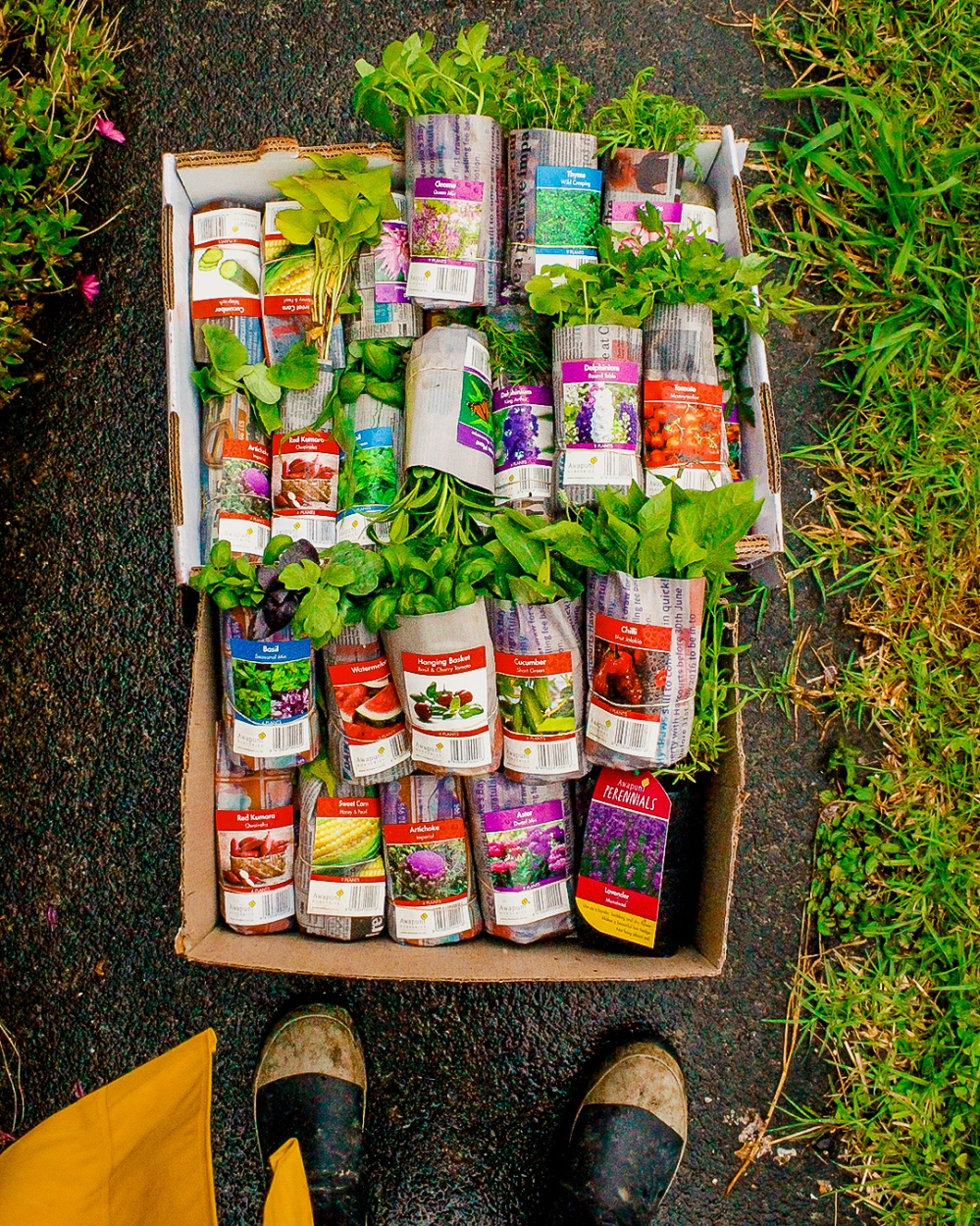 How To Plan Your Own Vegetable Garden