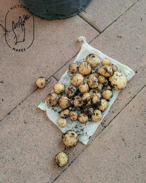 Potatoes_8